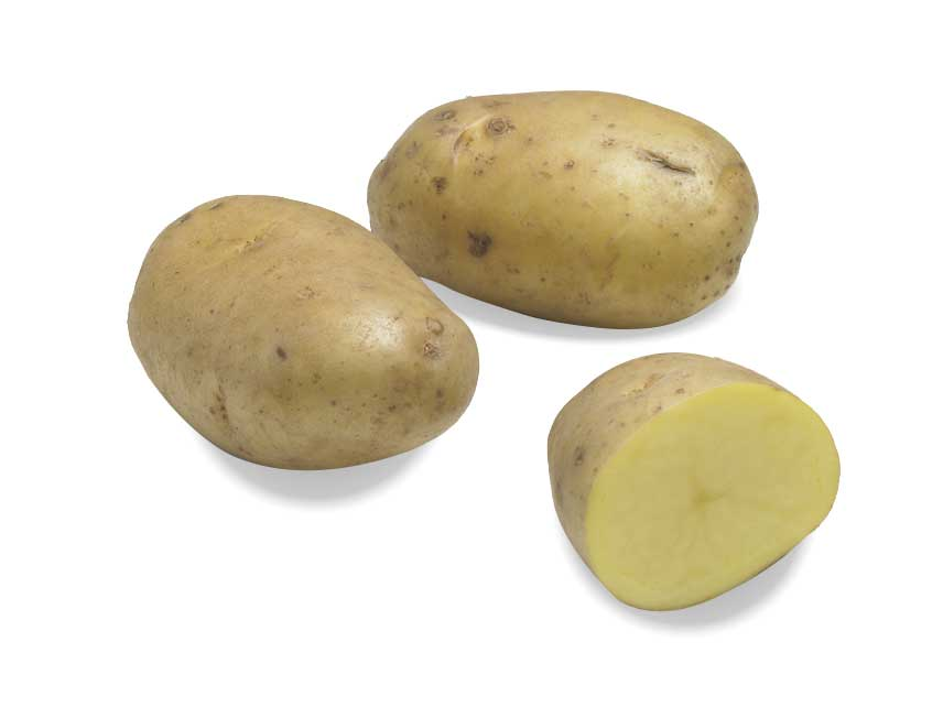 Pomme de terre de variété Agria