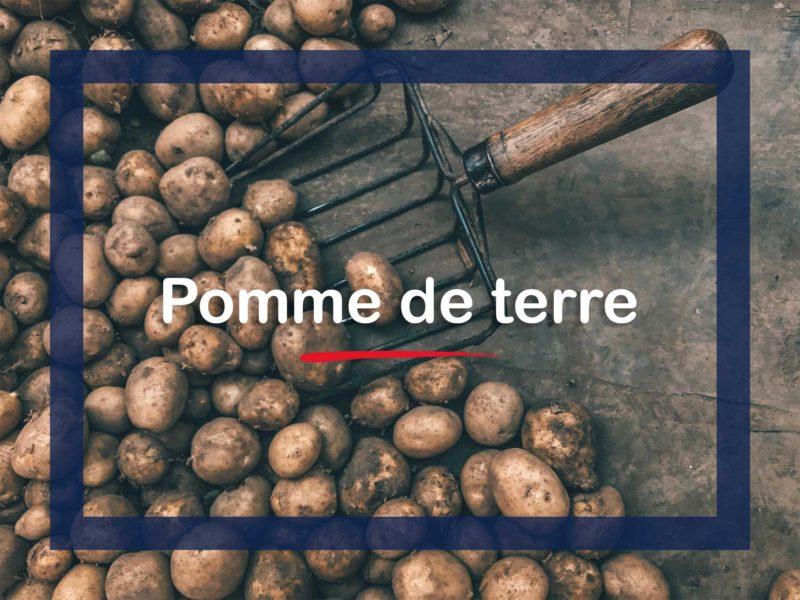 L'Histoire de la pomme de terre