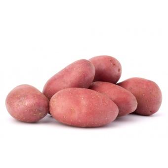 Pomme de terre de variété Chérie